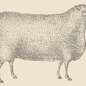 Sheep No. 4
