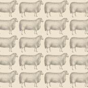 Sheep No. 4