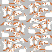 Rorange_and_white_cats_on_gray_shop_thumb