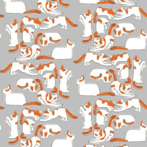Orange and White Cats on Gray