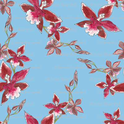 Orchids on light blue