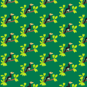 hornbill and leaves on green