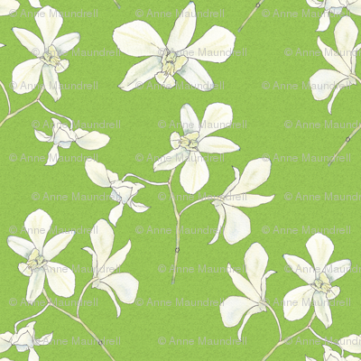 white orchids on spring green