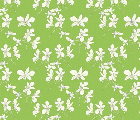 White_orchids_lt_green_shop_preview
