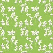 White_orchids_lt_green_shop_thumb
