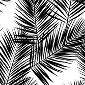 Palm Leaves Black On White On Isobar By Mirabelleprint