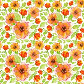 Sunny flowers anemones
