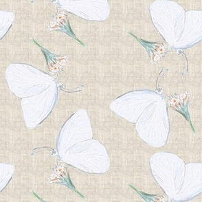 Great Southern White Butterfly Colored Pencil