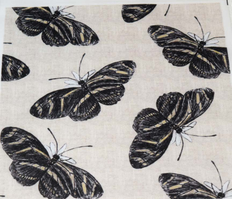 Zebra Longwing Butterfly Colored Pencil