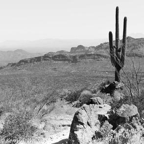 Saguaro B/W