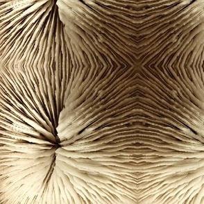 Razor Coral in Sepia