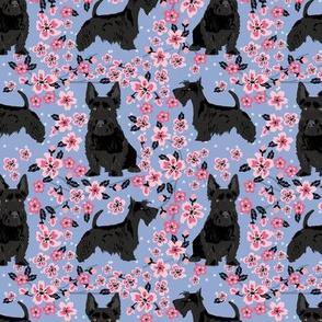 scottie dog dog fabric cherry blossom spring fabric - cute dog design - cerulean