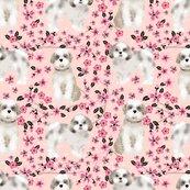 Rshih_tzu_cherry_blossom_2_shop_thumb