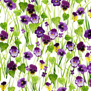 Pansies White