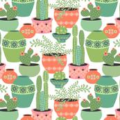 Cactus Plants: White
