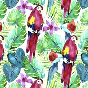 Rrainforest_macaw_shop_thumb