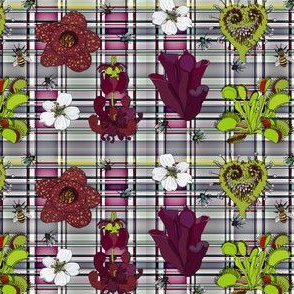 Insectivorous plants on pink and grey plaid