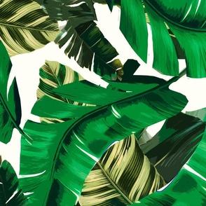 Tropical Banana Palm leaves