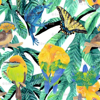 Rrainforest_animals_preview
