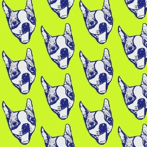 Pop art pup - Boston Terrier in tennis ball yellow and blue