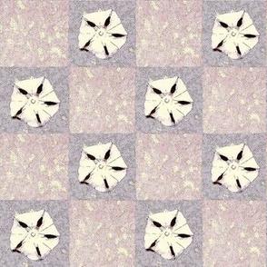 violet sand dollars