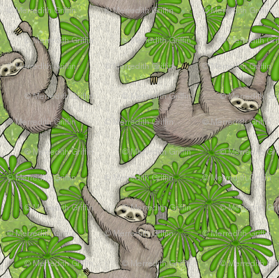 Rainforest Sloths