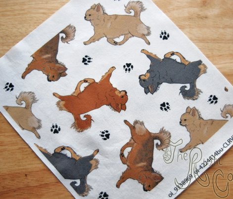 Trotting long coat Chihuahuas and paw prints - white