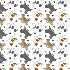 Trotting long coat Chihuahuas and paw prints C - white