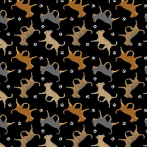 Trotting smooth coat Chihuahuas and paw prints - black