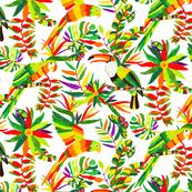 Rainforest Animals and Plants