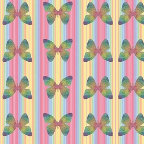 Butterfly Colored Stripe