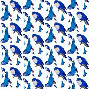 Blue Lories