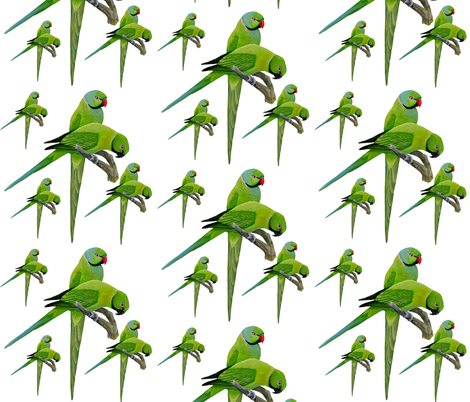 Echo Parakeet fabric by parrots on Spoonflower - custom fabric