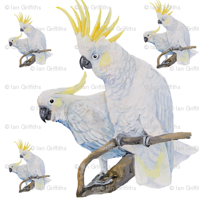 Lemon Crested Cockatoo