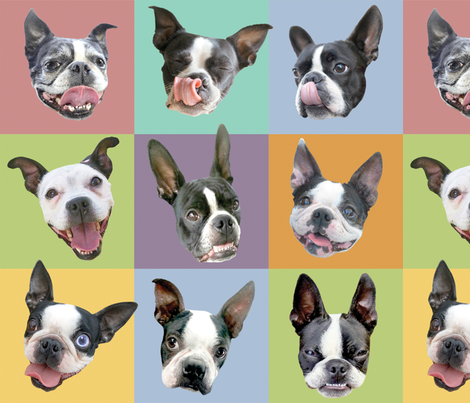 Boston Terriers -large portraits fabric by rawbonestudio on Spoonflower - custom fabric