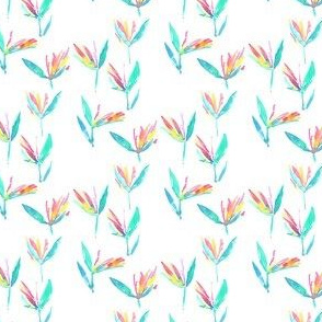 birds of paradise mini