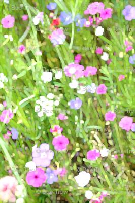 fusionwildflowers