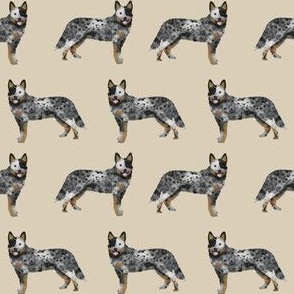 australian cattle dog simple sand