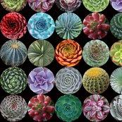 Succulents_med_blk_shop_thumb