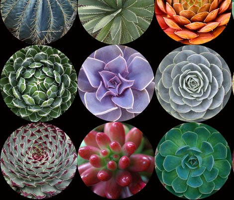 Succulents_lg_blk_shop_preview