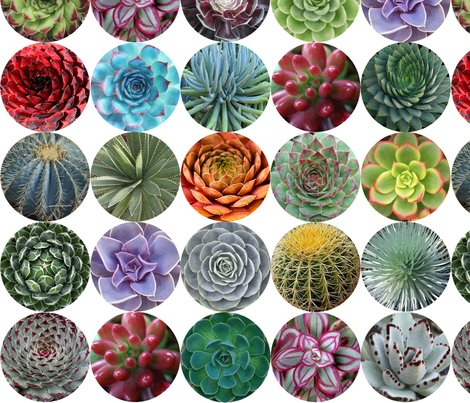 Succulents_med_white_shop_preview