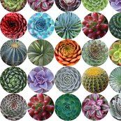 Succulents_med_white_shop_thumb