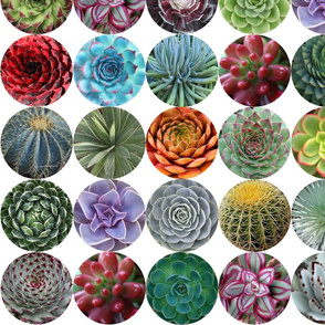 Succulent Circles - medium white