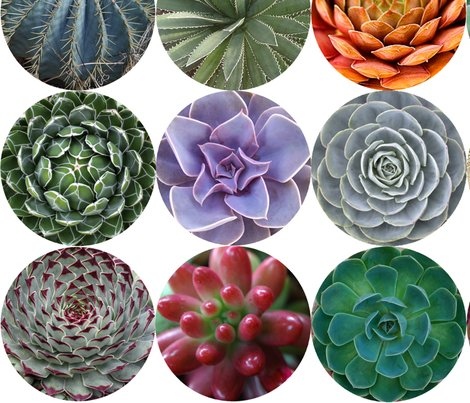 Succulents_lg_white_shop_preview