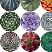 Succulents_lg_white_shop_thumb