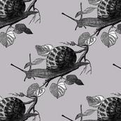 snails_v4