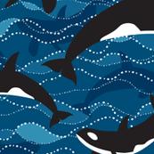Deep Sea Orcas