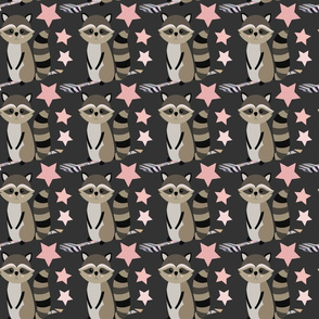 Star racoon on dark grey