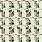 Star racoon on mint