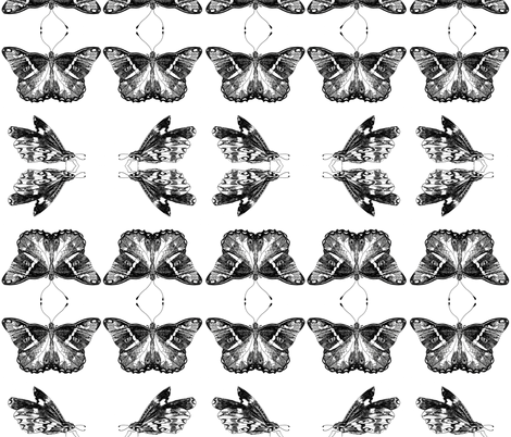 butterflies-ed fabric by artist_chloe_birnie on Spoonflower - custom fabric